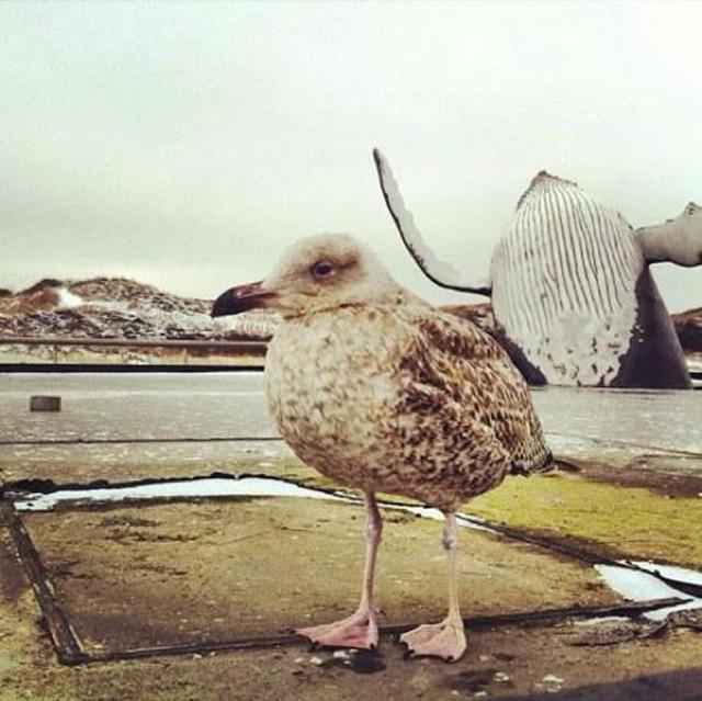 Os-melhores-photobombs-de-animais-Blog-Animal (6)