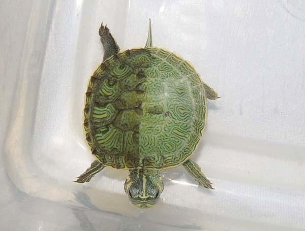 Animais-que-nasceram-com-metades-do-corpo-diferentes - Blog-Animal (11)