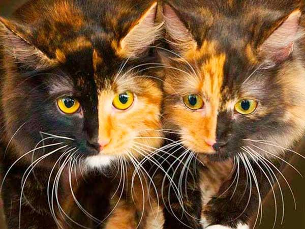 Animais-que-nasceram-com-metades-do-corpo-diferentes - Blog-Animal (6)