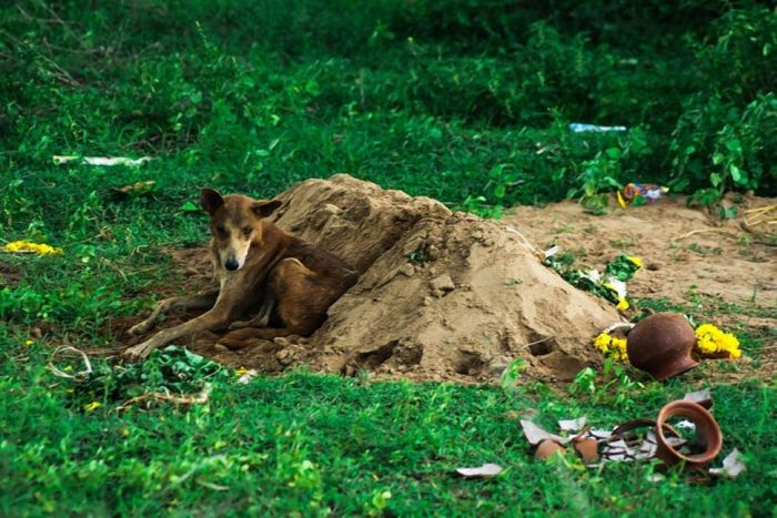 Cachorro se recusa a deixar a sepultura do seu dono - Blog Animal (2)
