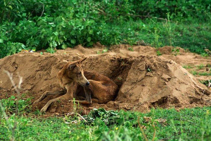Cachorro se recusa a deixar a sepultura do seu dono - Blog Animal (3)