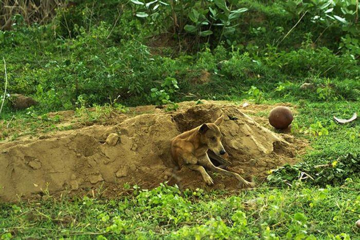 Cachorro se recusa a deixar a sepultura do seu dono - Blog Animal (4)