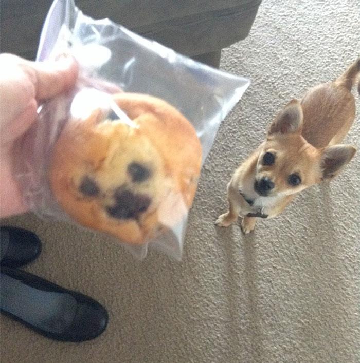 Fotos-de-cachorros-que-se-parecem-com-outras-coisas (3)