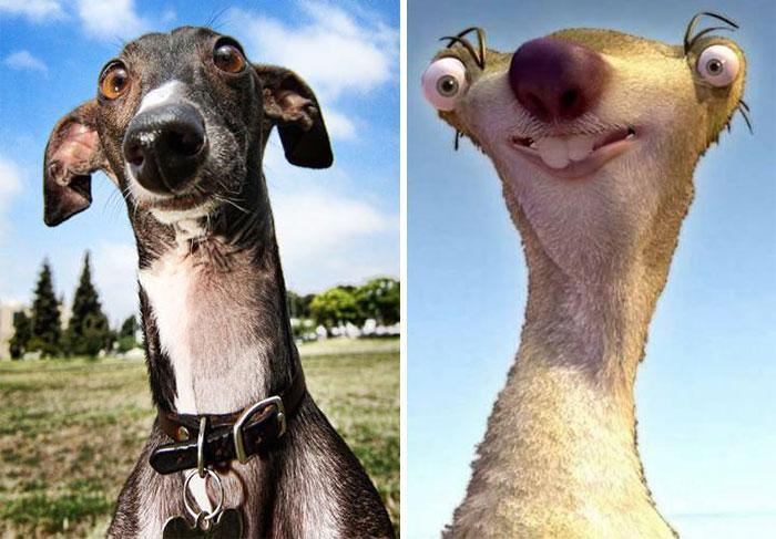 Fotos-de-cachorros-que-se-parecem-com-outras-coisas (5)