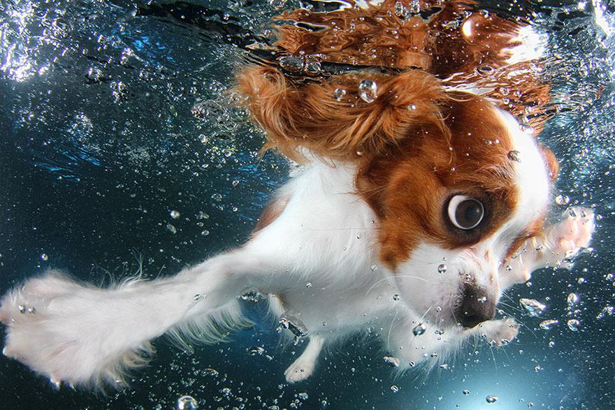 Foto de filhotes de cachorro debaixo d'agua (1)