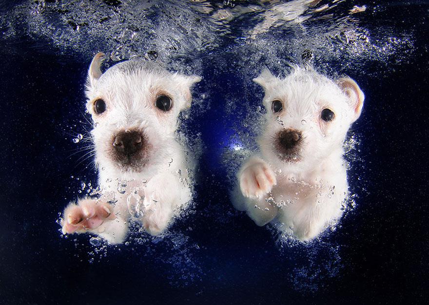 Foto de filhotes de cachorro debaixo d'agua (2)