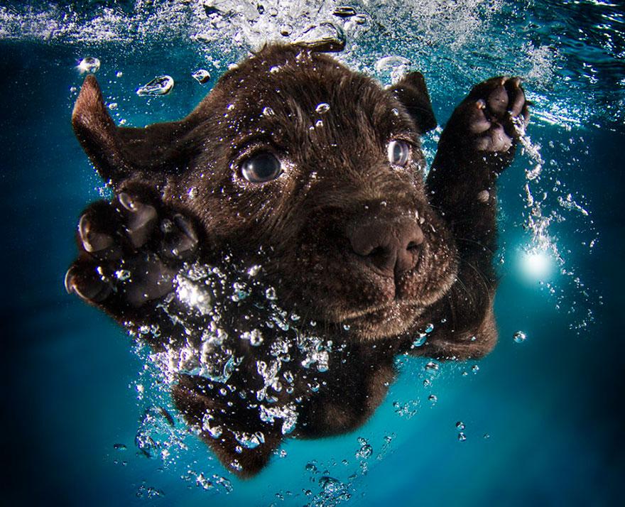 Foto de filhotes de cachorro debaixo d'agua (5)