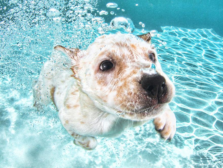 Foto de filhotes de cachorro debaixo d'agua (9)