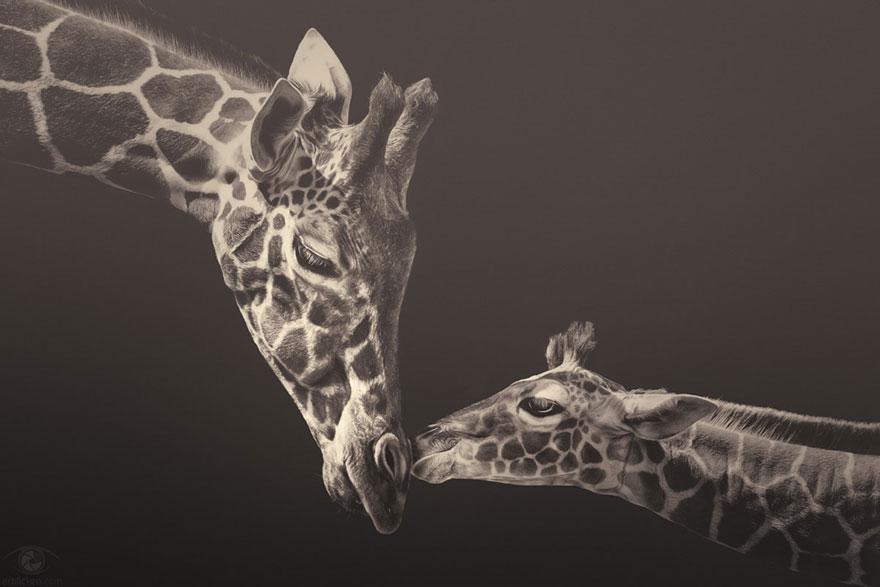 Fotografias sentimentais de animais por Manuela Kulpa (1)