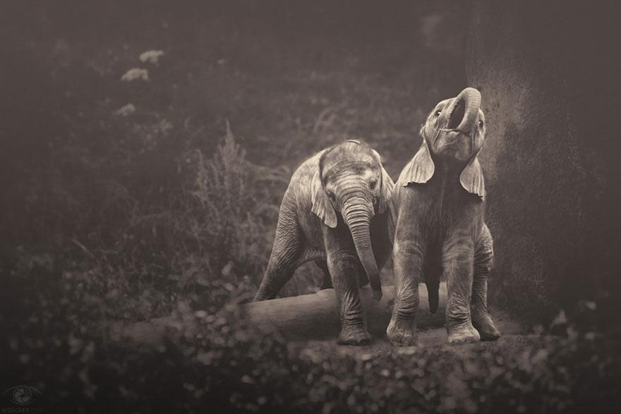 Fotografias sentimentais de animais por Manuela Kulpa (10)