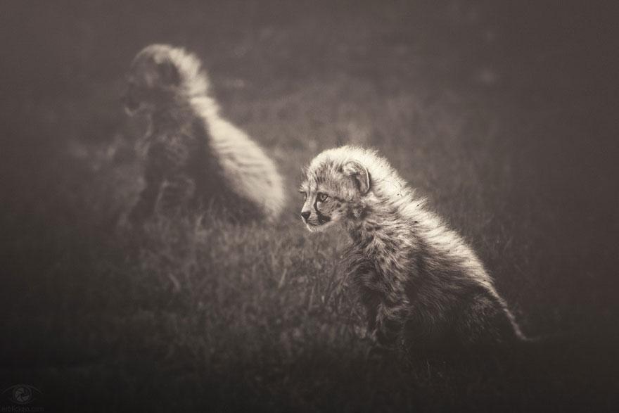 Fotografias sentimentais de animais por Manuela Kulpa (2)