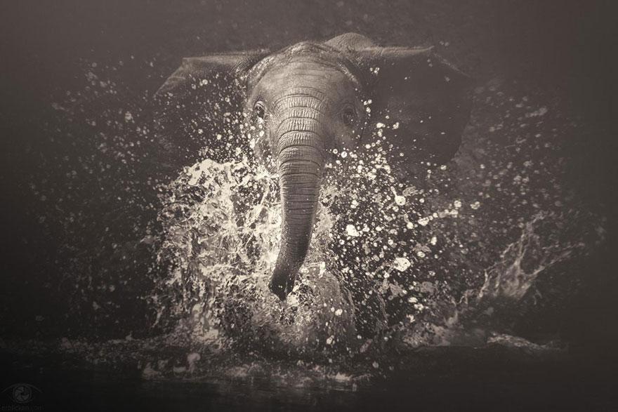 Fotografias sentimentais de animais por Manuela Kulpa (4)