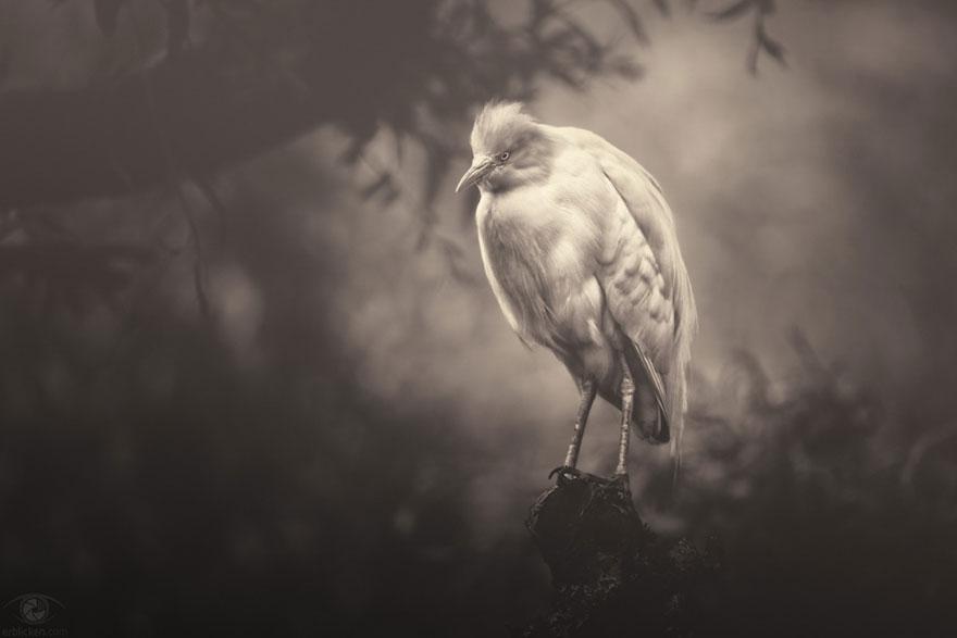 Fotografias sentimentais de animais por Manuela Kulpa (5)