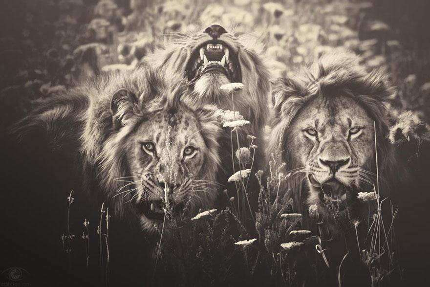 Fotografias sentimentais de animais por Manuela Kulpa (7)