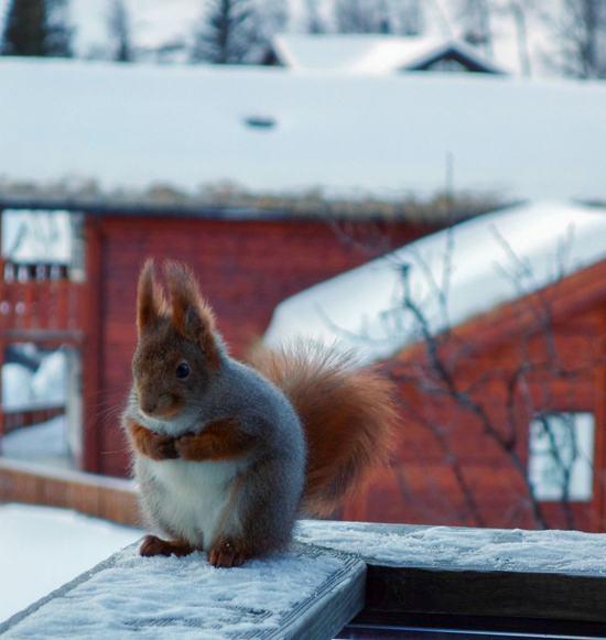 Fotos-de-animais-gordinhos-Blog-Animal (11)