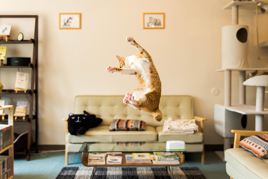 Gatos pulando como Ninjas (1)