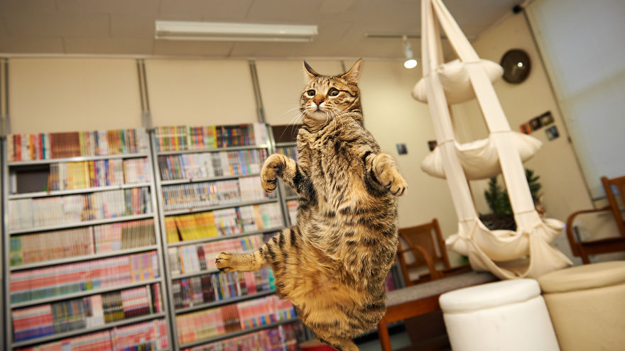 Gatos pulando como Ninjas (10)