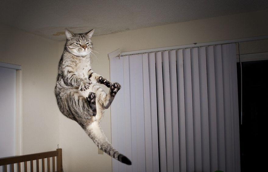 Gatos pulando como Ninjas (11)