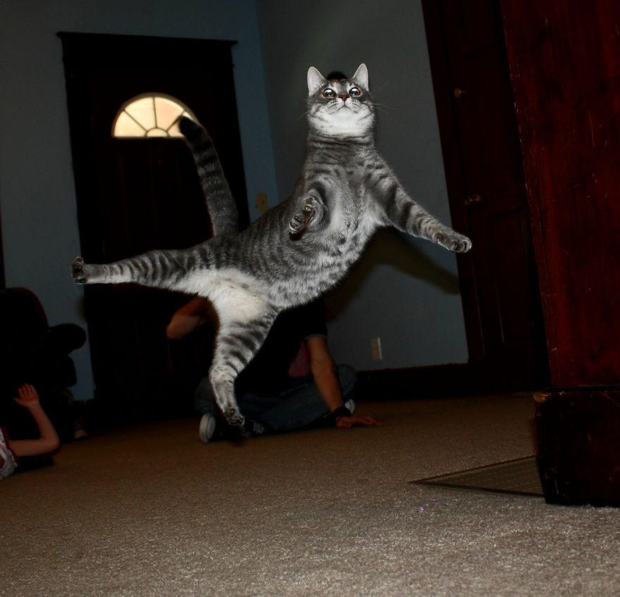 Gatos pulando como Ninjas (14)