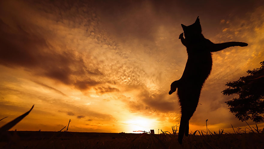 Gatos pulando como Ninjas (6)