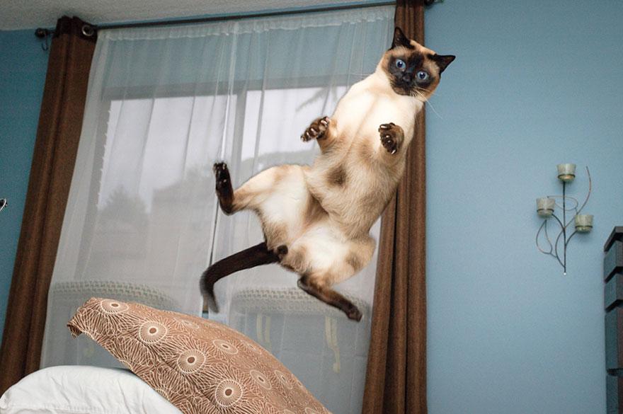 Gatos pulando como Ninjas (7)