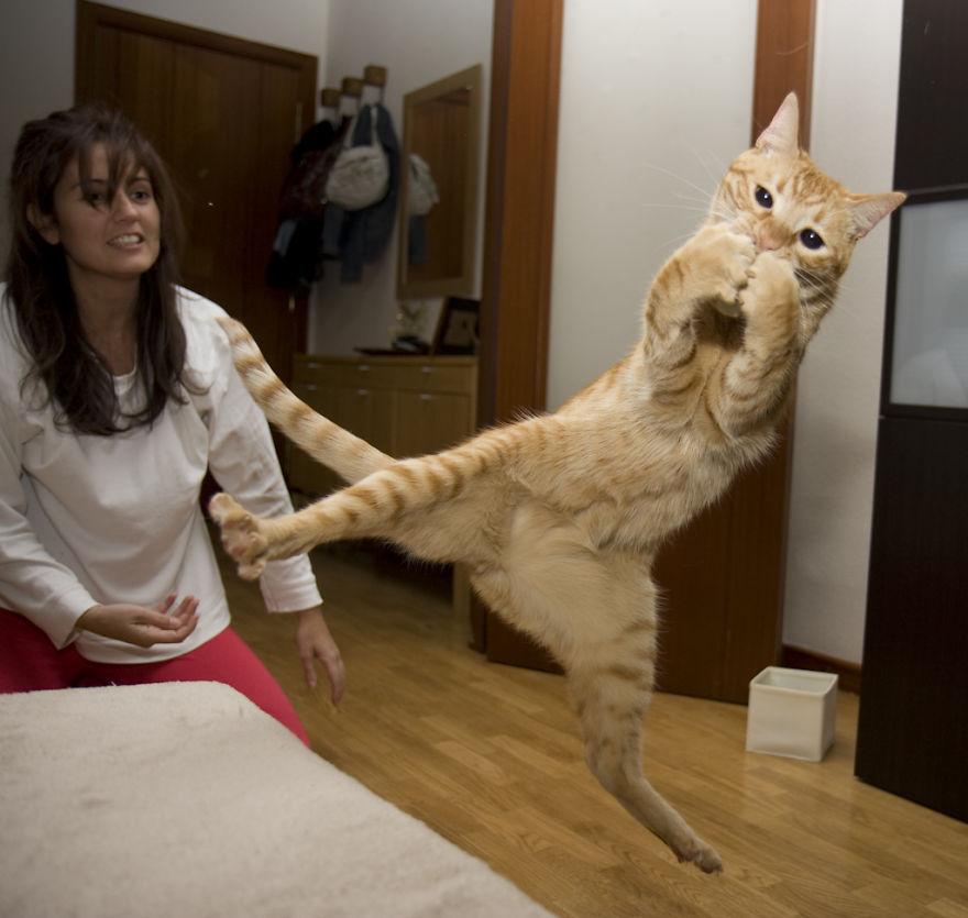 Gatos pulando como Ninjas (9)