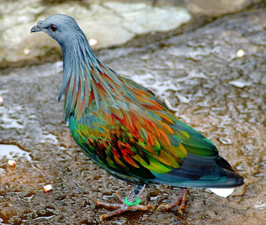 20-Animais-com-cores-curiosamente-diferentes-Blog-Animal (1)