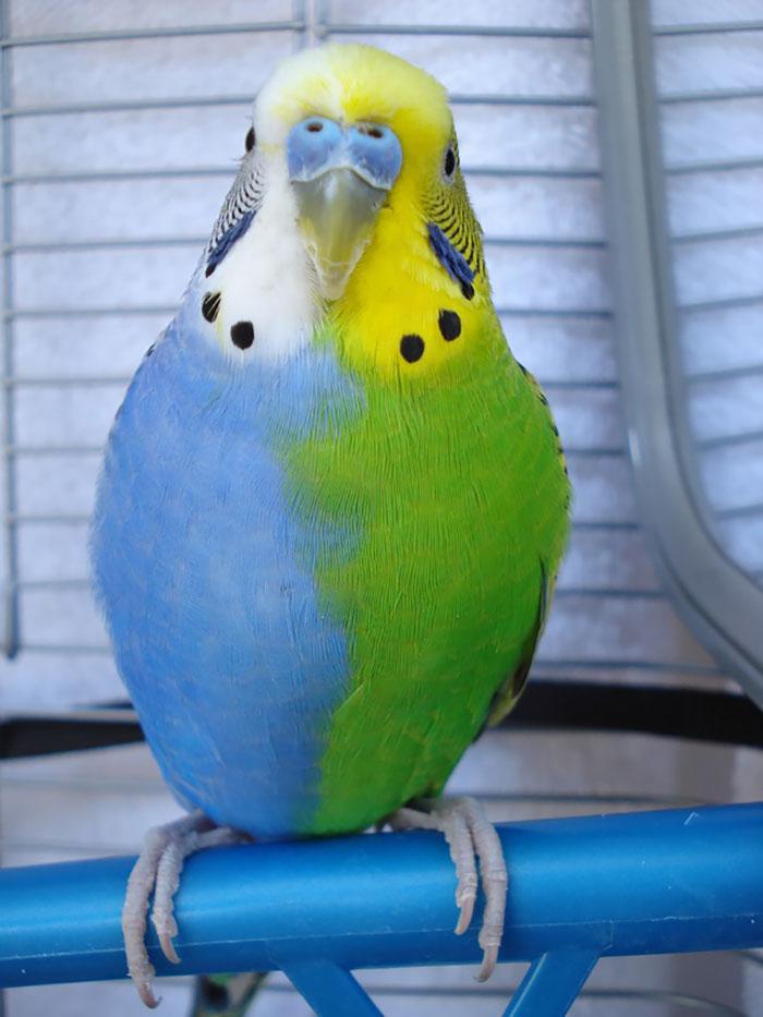 20-Animais-com-cores-curiosamente-diferentes-Blog-Animal (12)