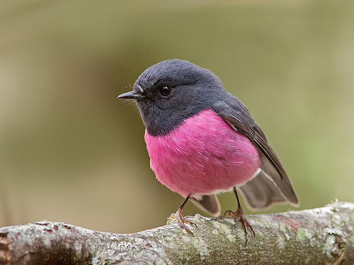 20-Animais-com-cores-curiosamente-diferentes-Blog-Animal (15)