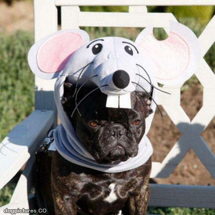 21-animais-que-absolutamente-odeiam-suas-fantasias-Blog-Animal (10)
