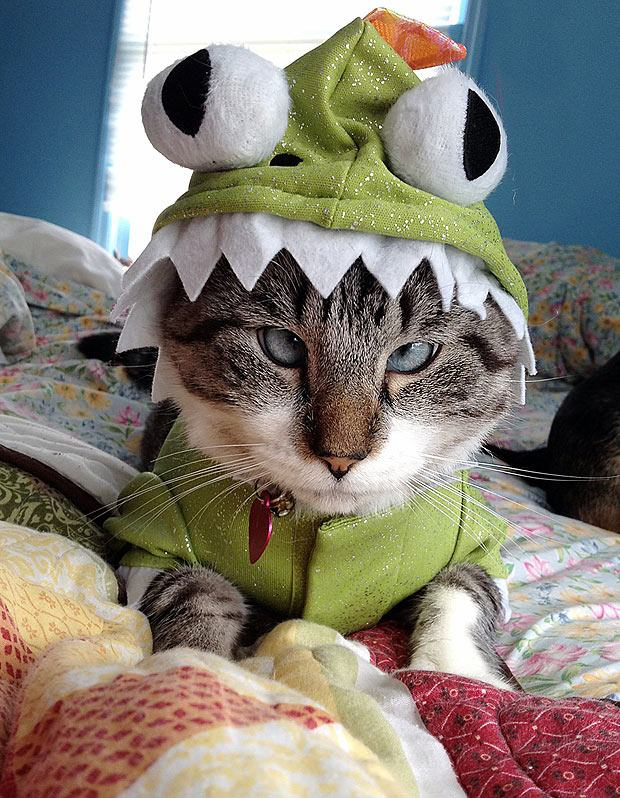 21-animais-que-absolutamente-odeiam-suas-fantasias-Blog-Animal (15)