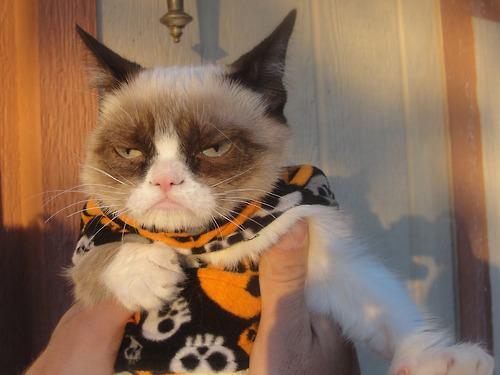 21-animais-que-absolutamente-odeiam-suas-fantasias-Blog-Animal (16)