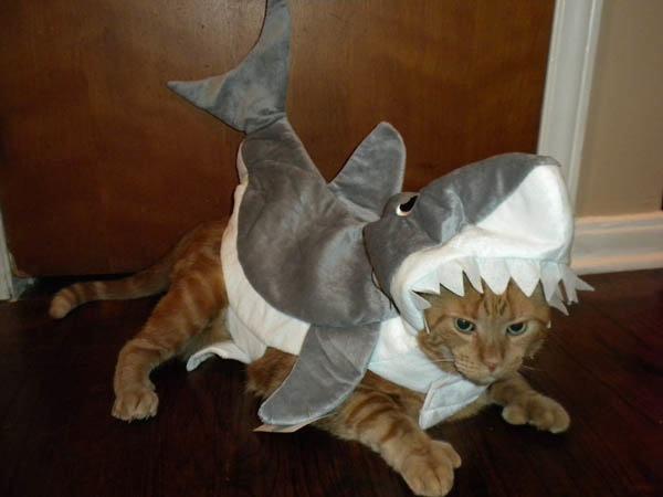 21-animais-que-absolutamente-odeiam-suas-fantasias-Blog-Animal (17)