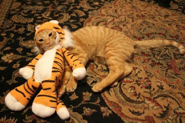 21-animais-que-absolutamente-odeiam-suas-fantasias-Blog-Animal (22)