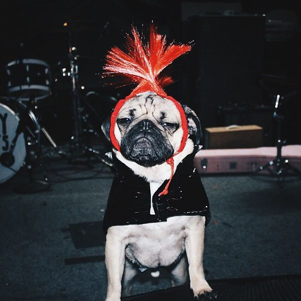 Doug - O Pug que adora Halloween (10)