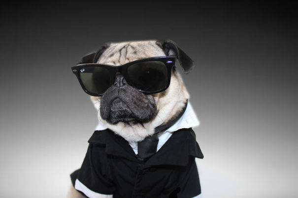 Doug - O Pug que adora Halloween (6)