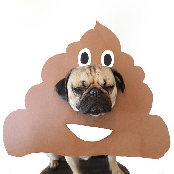 Doug - O Pug que adora Halloween (7)