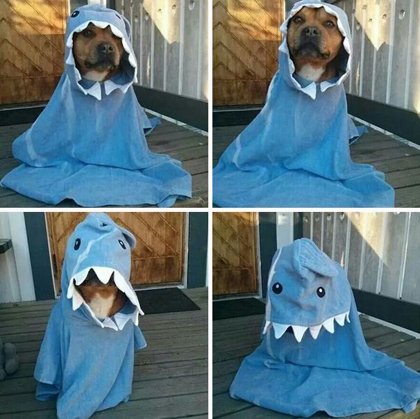 Fantasias de Halloween para animais (13)