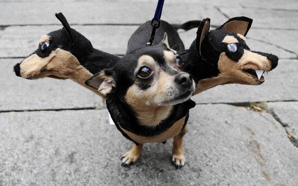 Fantasias de Halloween para animais (17)