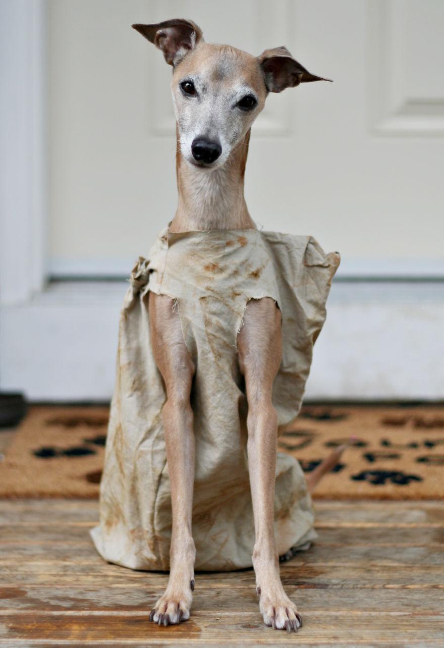 Fantasias de Halloween para animais (2)
