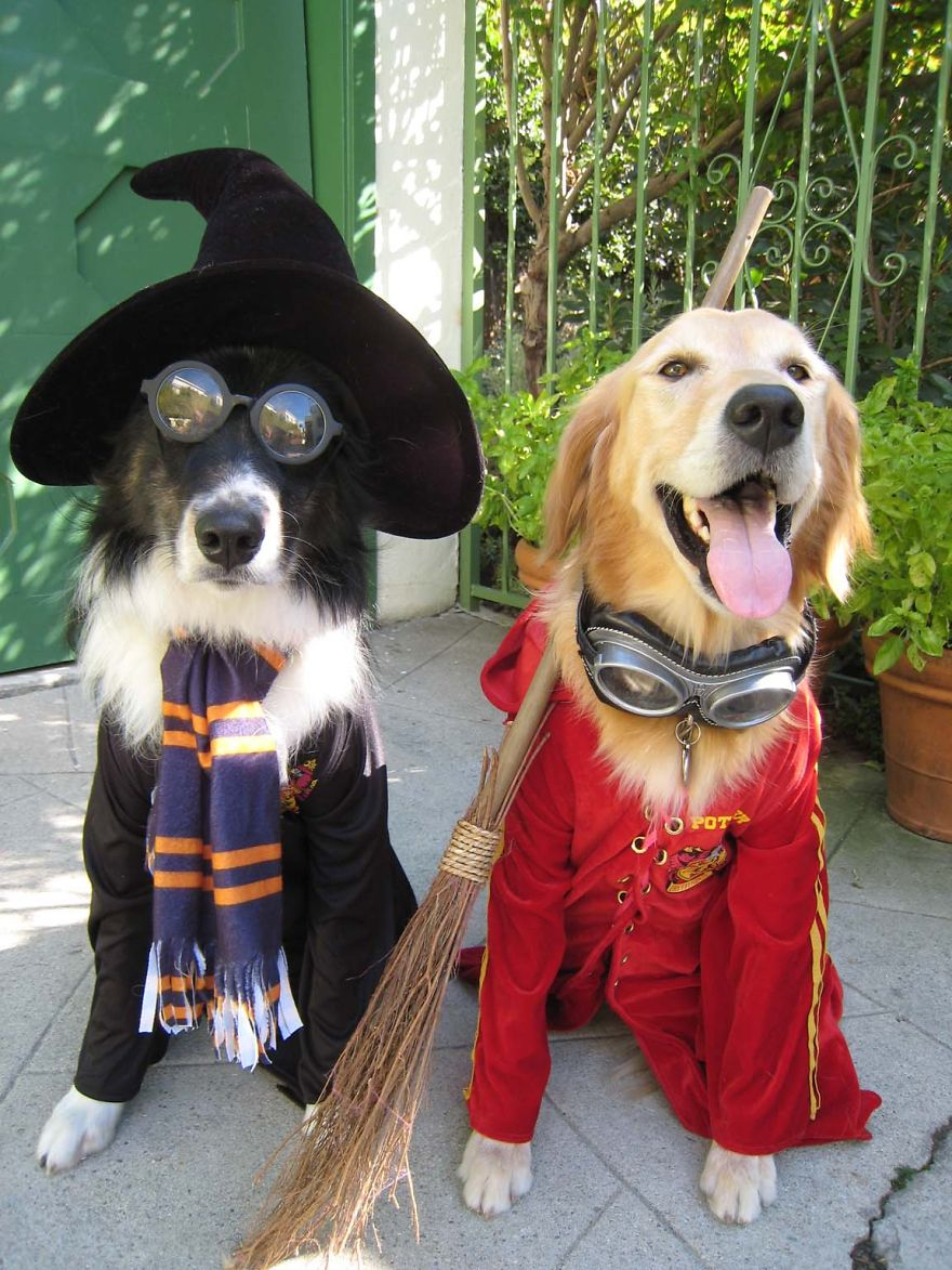Fantasias de Halloween para animais (5)