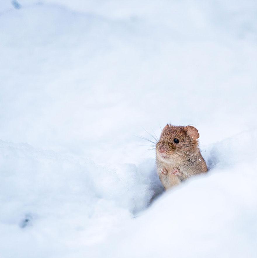 Pequenos camundongos selvagens (5)