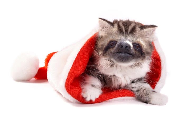 kittens-sloths-combined-slittens-32