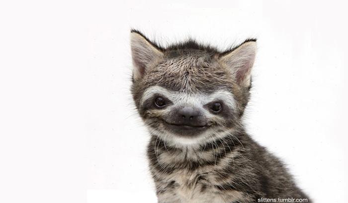 kittens-sloths-combined-slittens-36