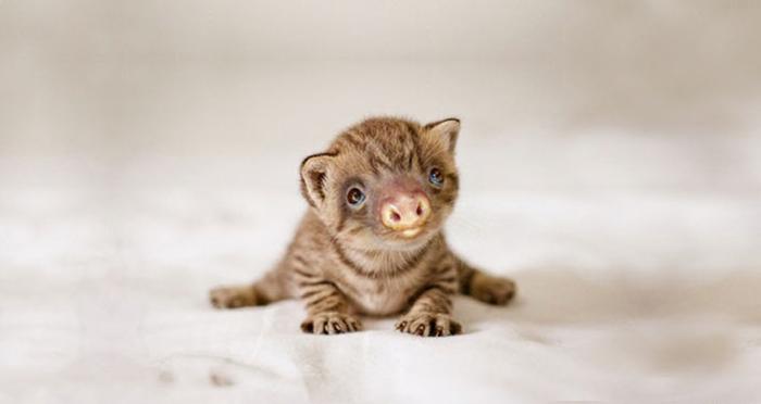 kittens-sloths-combined-slittens-37