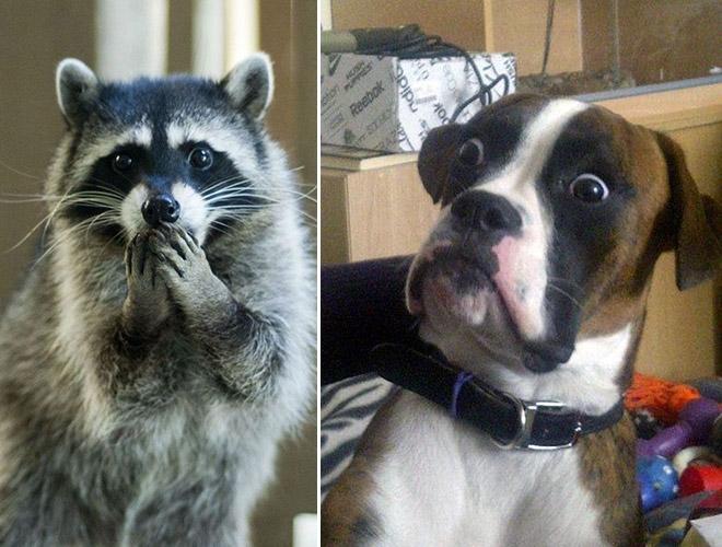 19-Animais-completamente-espantados-Blog-Animal (18)