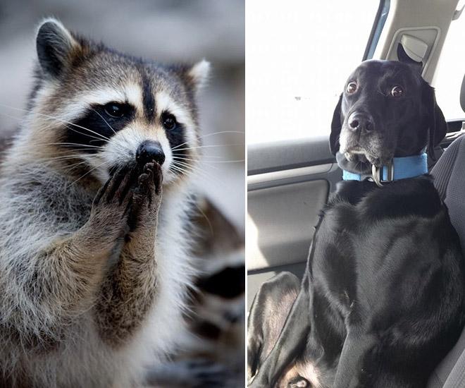 19-Animais-completamente-espantados-Blog-Animal (2)
