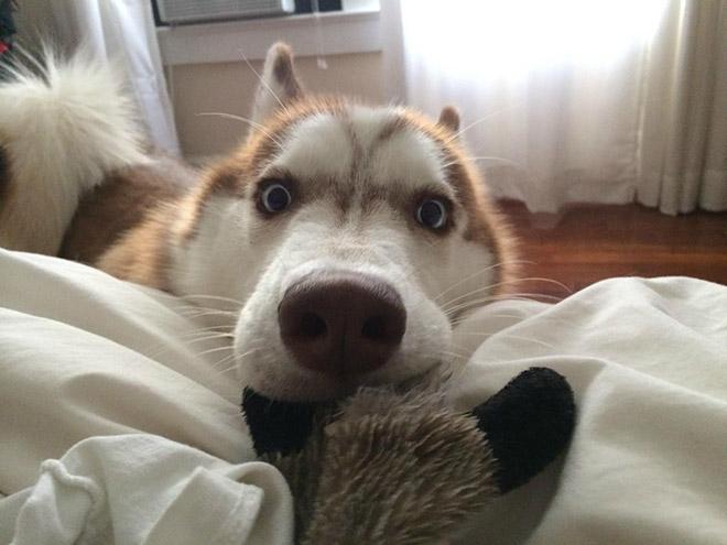 19-Animais-completamente-espantados-Blog-Animal (3)