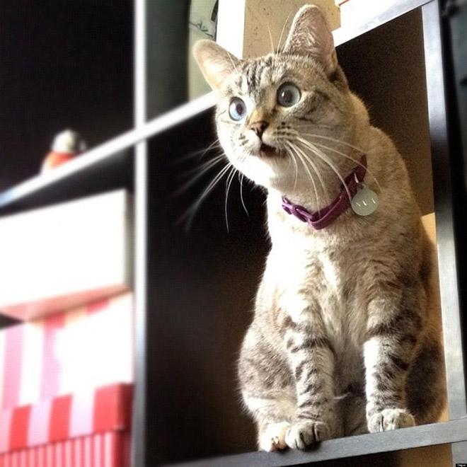 19-Animais-completamente-espantados-Blog-Animal (8)