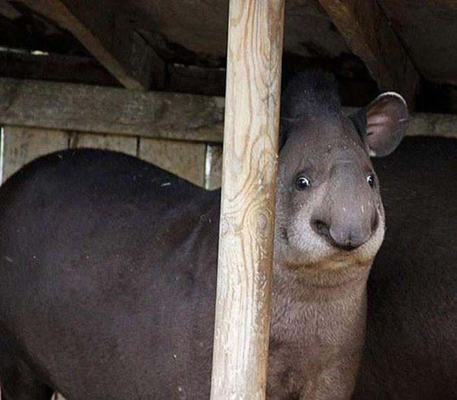 19-Animais-completamente-espantados-Blog-Animal (9)